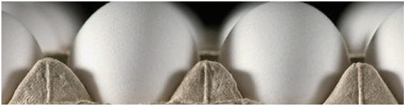 Alérgenos más importantes en el huevo