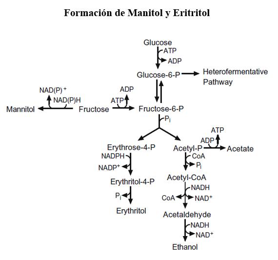 Formación de manitol y eritrol