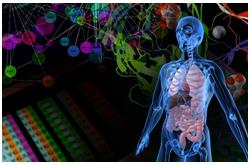 La NSB comienza en los niveles molecular y celular para describir la respuesta del organismo y los procesos cuantitativamente en términos matemáticos