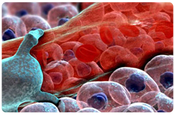 Dieta y hemostasia