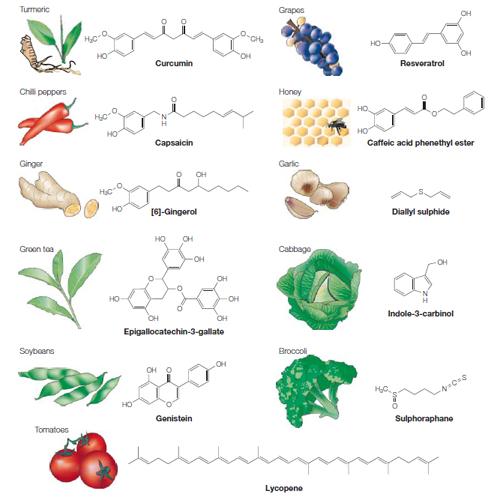 Fitoquímicos y sus fuentes dietarias