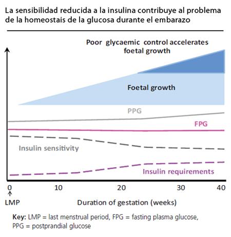 Resistencia a la insulina en el embarazo