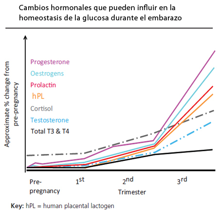 Cambios hormonales que influyen en la homeostasis de la glucosa