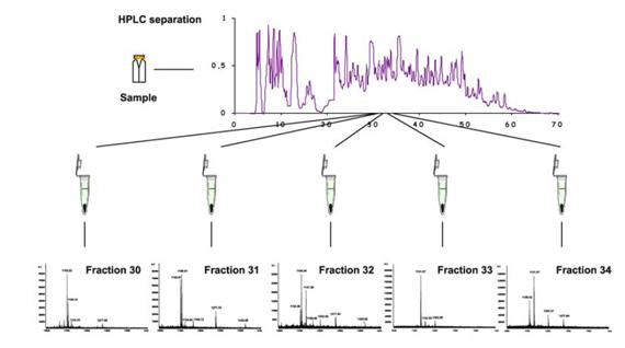 Esquema de la información obtenida de la combinación de técnicas  HPLC–MALDI-TOF MS