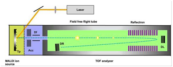 """Representación esquemática de un instrumento de desorción laser asistida por matriz-tiempo de vuelo-espectrometría de masa (MALDI-TOF-MS), Los iones son acelerados por un campo electrostático que se aplica en los platos de aceleración (Acc),y guiados a través de los deflectores (Df) antes de entrar al """"campo libre"""" de vuelo"""