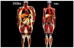 La imagenología es una técnica para establecer la composición corporal útil pero con limitaciones