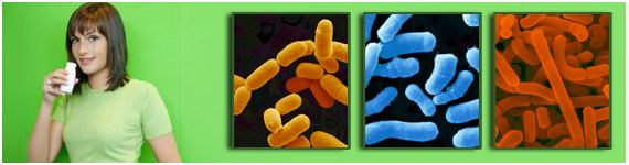 Principales probióticos: Lactobacillus rhamnosus, Bifidobacterium y Lactobacillus acidophilus