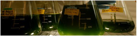 Las microalgas verdes acumulan altas concentraciones de carotenoides como el β-caroteno, la astaxantina y la cantaxantina