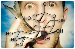 Molécula de tetradoxina