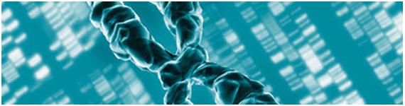 Organizacion del genoma humano