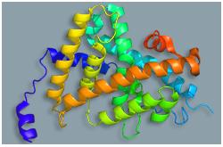 Receptor de la hormona tiroidea (TR-Alfa)