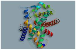 Receptor activado por proliferador de peroxisoma (PPAR-Alfa)