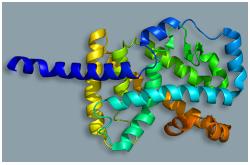 Receptor huerfano relacionado a RAR (ROR-Alfa o NR1F1)