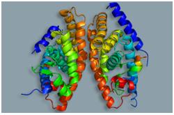 Receptor de hígado X (LXR-Alfa) es codificado por NR1H3