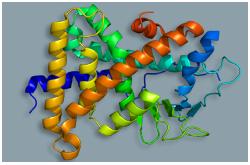 Receptor PXR, también conocido como NR1I2