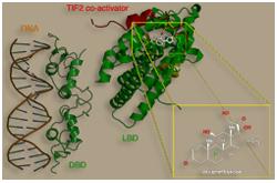 Receptor glucocorticoide (GCR o NR3C1)