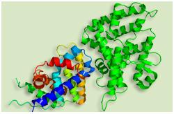 Receptor  DAX-1