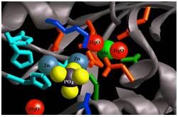 Modelo tridimensional enzima fosfatasa alcalina