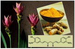 La planta cúrcuma, posee un prometedor compuesto quimiopreventivo
