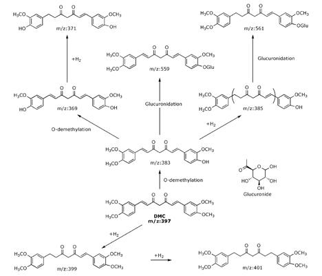 Metabolismo y actividad anticancerígena, del análogo de Curcumina: Demetoxicurcumina