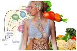 La obesidad es el resultado de un desbalance entre la ingestión y el gasto de energía