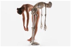 La renovación ósea puede ser medida a través de auto-analizadores, utilizando una variedad de marcadores bioquímicos en suero u orina
