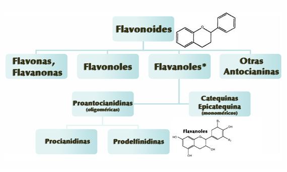 Principales Flavonoides, siendo los Flavanoles* la clase predominante encontrada en el cacao y sus derivados