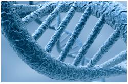 Los mecanismos epigenéticos juegan un importante papel en la patogénesis de la diabetes mellitus tipo 2