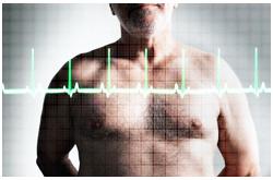 El corazón es afectado por la alteración de la composición corporal