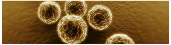Grupo de baterias Chlamydia sp.