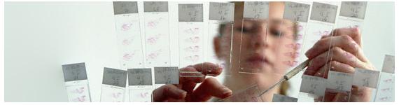 Científica analizando varias muestras de tejidos cancerosos