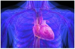 El estrés oxidativo y cambios inflamatorios en el transcriptoma y el secretoma vascular y cardiaco promueve el desarrollo de enfermedades cardiovasculares