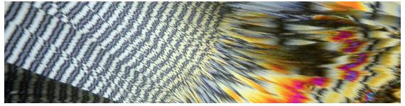 Microfotografía del Colesterol con luz polarizada