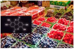 Las frutas de baya comunes son una rica fuente de fenólicos antioxidantes, con otras propiedades promotoras de la salud