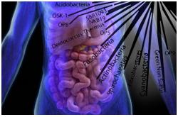 La microbiota en el cuerpo humano adulto comprende una biomasa superior a los 100 mil millardos de bacterias esparcidas en más de 400 especies
