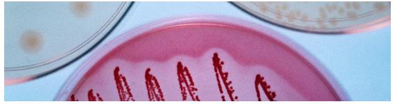 Los genomas de los alimentos interactúa con el genoma humano, ya sea directamente o mediado por la interfase con el metagenoma microbiano intestinal