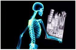 El fosfato dietario es requerido para apoyar el crecimiento y mantenimiento del esqueleto