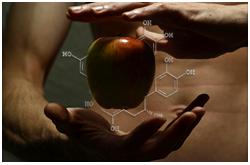Los compuestos polifenólicos contribuyen al color, sabor, aroma y actividad metabólica de los alimentos basados en plantas