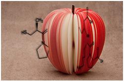 Los 43 componentes del extracto orgánico de manzana, incluyendo triterpenos nuevos caracterizados, tiene actividad antioxidante a varios niveles