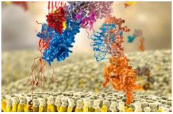 Modelo molecular del receptor de la insulina
