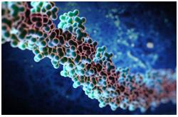 Cambios en los perfiles de metilación del DNA pueden ocurrir durante el envejecimiento y en los estados patológicos, como el cáncer y las enfermedades metabólicas
