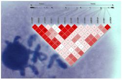 Asociaciones de SNP en los genes FADS con varios PUFA ω-6 y ω-3