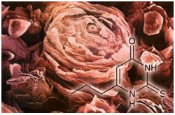 Micrografia de las papilas gustativas y la sensibilidad a 6-n-propiltiouracilo (PROP) tienen relación con el comportamiento alimentario y la masa corporal