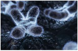 El daño al DNA a nivel de la secuencia de bases, el epigenoma y el cromosoma, es la causa fundamental de enfermedades del desarrollo y degenerativas