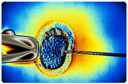 La deficiencia de vitamina D podría ser importante para las alteraciones endocrinas, incluyendo la fertilidad tanto en mujeres como en hombres