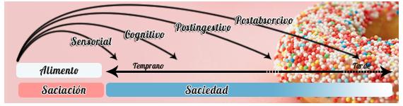 La saciación ocurre al momento de alimentarse y representa el efecto acumulativo de señales inhibidoras inducidas por la ingestión de substancias alimenticias a medida que progresa la comida
