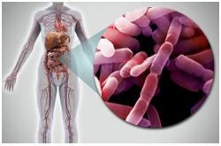 La microbiota intestinal puede jugar un papel intrigante en el desarrollo de la obesidad y las enfermedades asociadas a esta