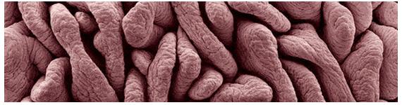 La microbiota es una colección de microorganismos que incluye bacterias, arqueas, virus y algunos eucariotas unicelulares