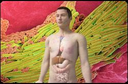 La colonización por estos microorganismos es tan extensa que en el cuerpo hay un número prácticamente igual de células humanas y de células microbianas