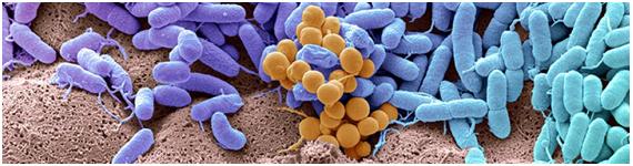 Todas las experiencias y exposiciones a lo largo de la vida contribuyen a la diversidad de la microbiota humana